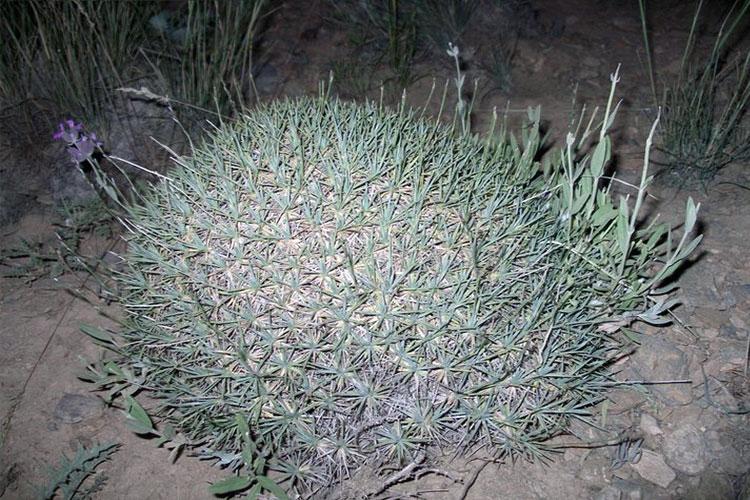 گیاهان منطقه حفاظت شده سیاهکوه اردکان