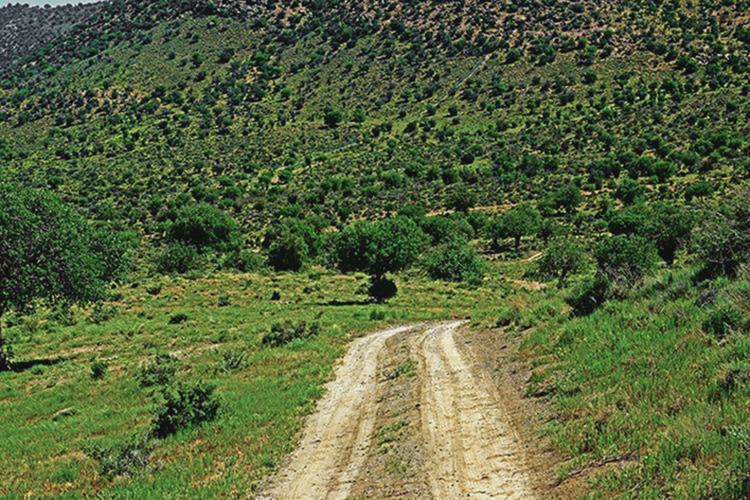 جنگل شادی هرات