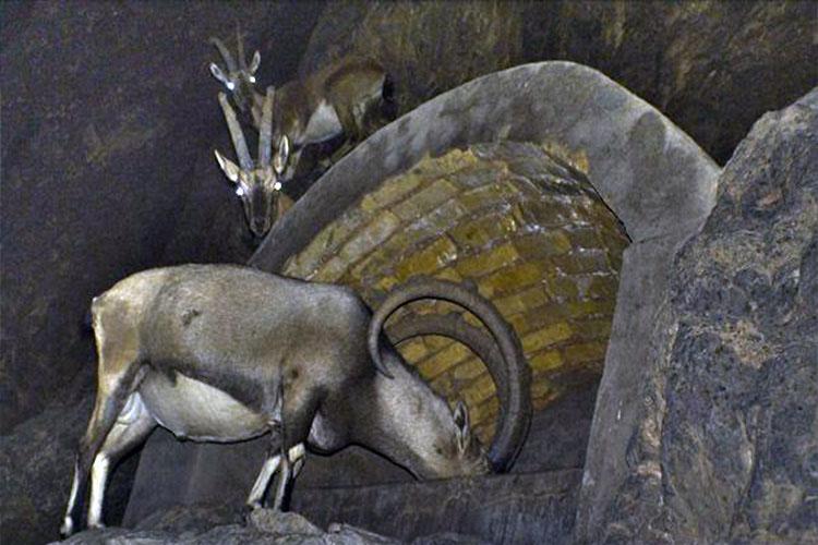 منابع آبی منطقه حفاظت شده سیاهکوه اردکان