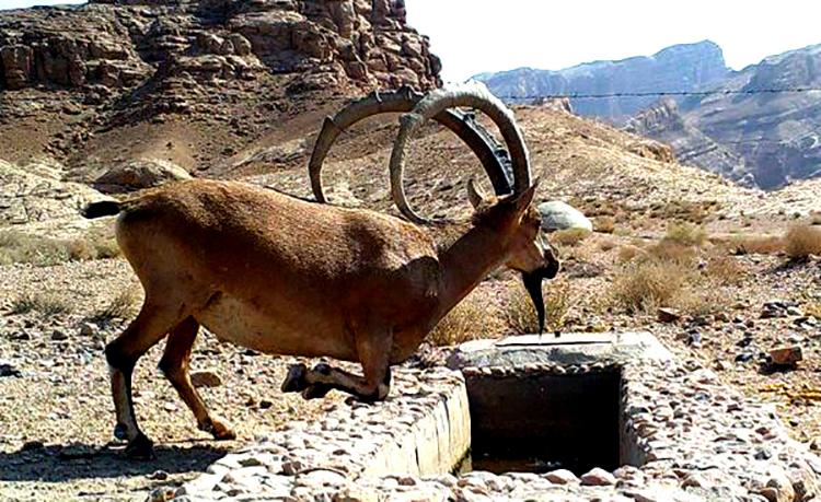 منابع آبی منطقه حفاظت شده کوه بافق