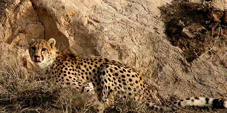 جانوران منطقه حفاظت شده کوه بافق