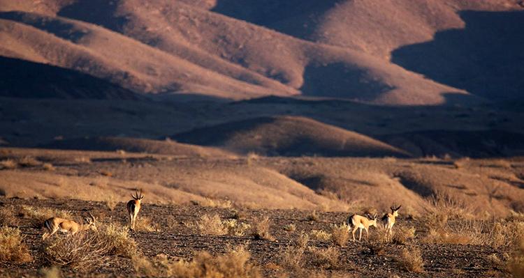 نمای منطقه حفاظت شده سیاهکوه اردکان
