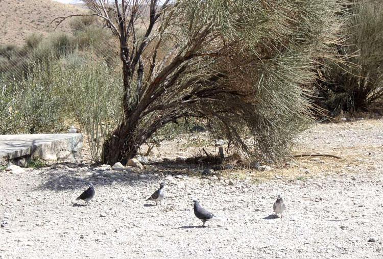 منطقه حفاظت شده باغ شادی یزد