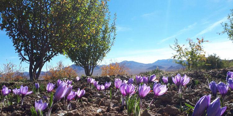 سفرنامه ای با رنگ زعفران از سفرهای رادینا