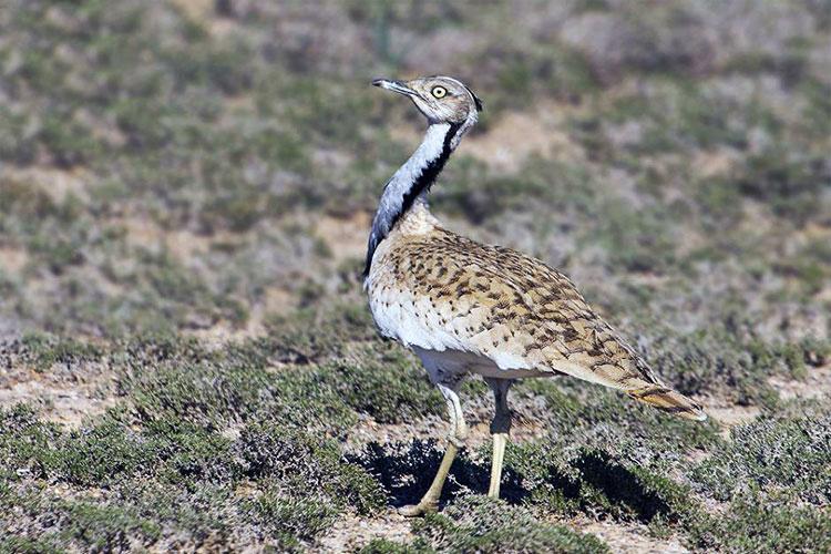 پرندگان منطقه حفاظت شده سیاه کوه اردکان