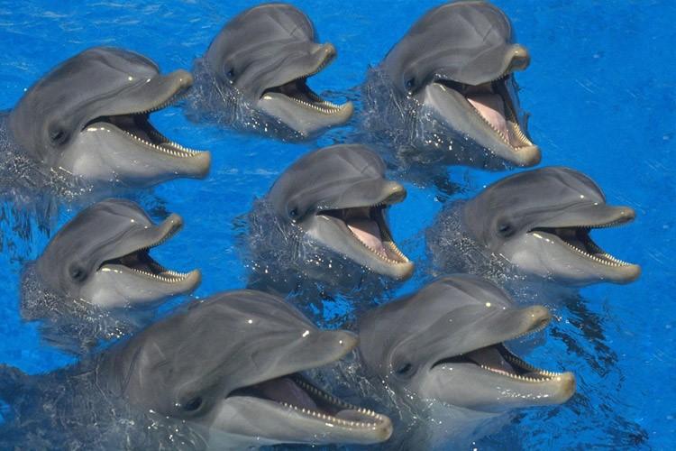 دلفین در کیش