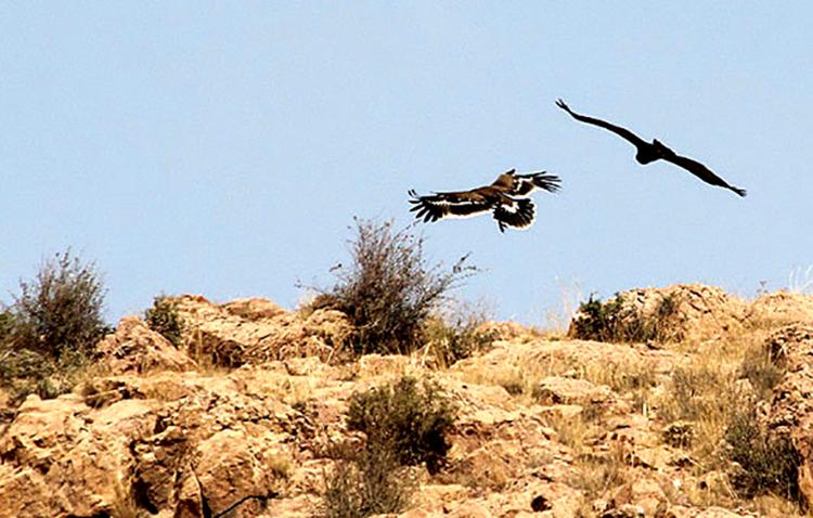 پرندگان منطقه حفاظت شده کوه بافق