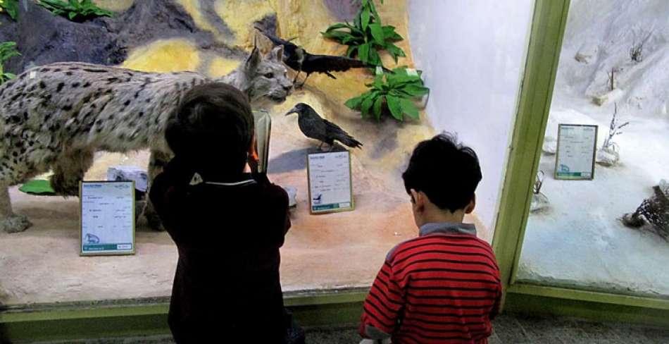 موزه کودک و طبیعت