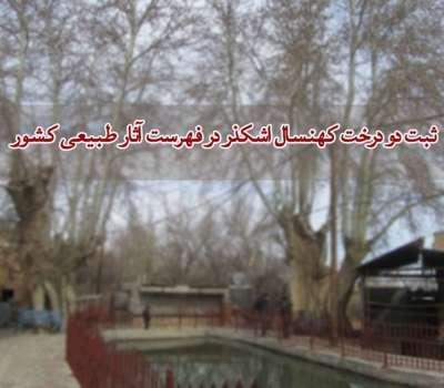 ثبت ملی دو درخت کهنسال اشکذر