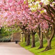در بهار بدون سفر چه کنیم؟!