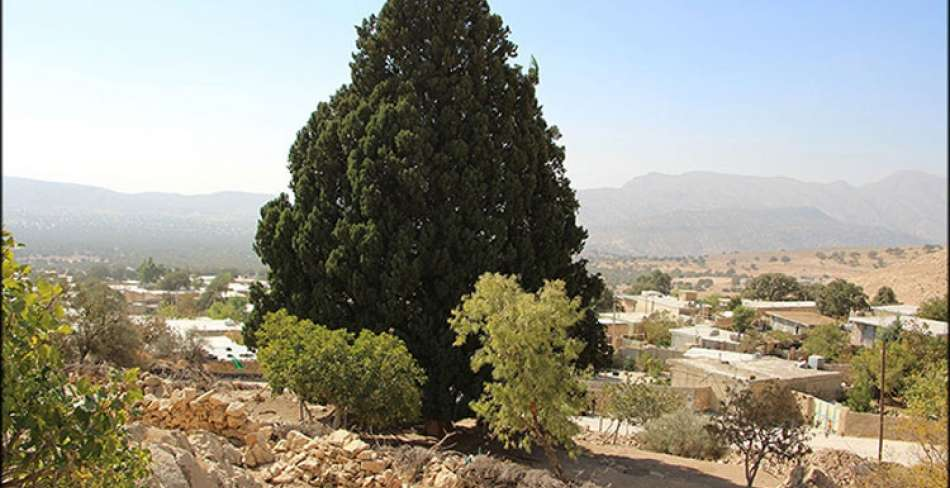 Shrine of Sarv-e Hosseini ( Hosseini Cypress )