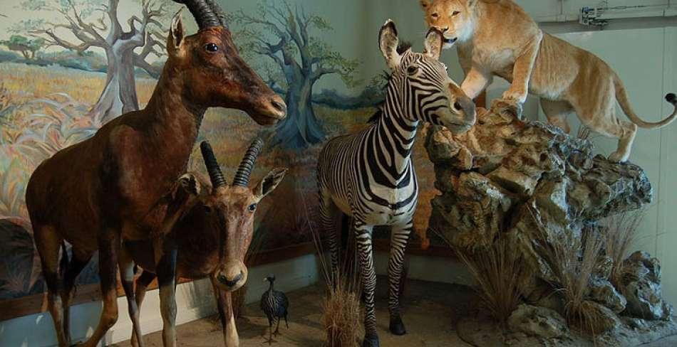 موزه تاریخ طبیعی یزد ( محیط زیست )
