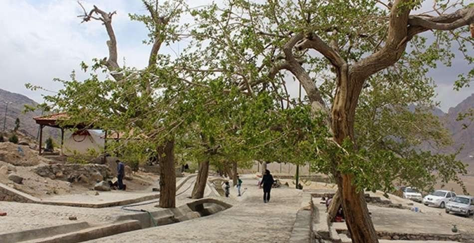 چشمه تامهر تفت