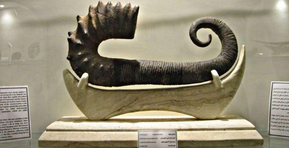 موزه کامبرین