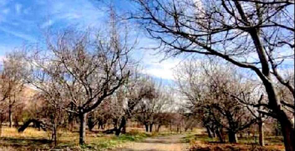روستای علی آباد تفت