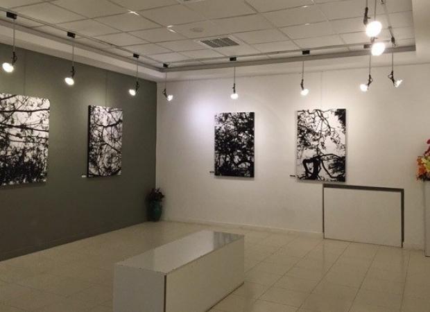 نمایشگاه ها و گالری ها